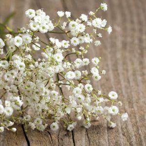 Качим, или Гипсофила сухоцветы сухие цветы растения букет композиция