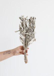 Крестовник пепельный сухоцветы сухие цветы растения букет композиция