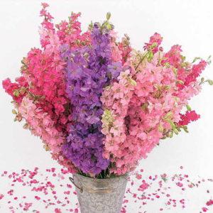 Живокость силикагель сушка цветы сухоцветы однолетние растения